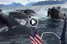 """كاميرا ترصد """"مشهدا مهيبا"""" بالصدفة البحتة وسط المحيط"""