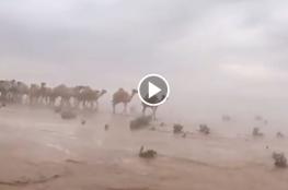 """""""شاهد"""" صحراء السعودية كما لم ترها من قبل!"""
