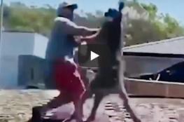 بعد استفزازه كنغر يشن هجوما مباغتا على رجل ويلقيه طريحا بضربة واحدة