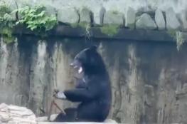 """فيديو مثير لدب يستخدم عصي """"الننشاكو"""""""