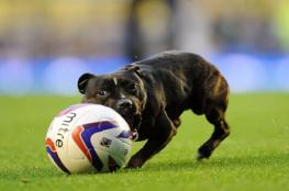 حكم يطرد كلبا بالبطاقة الحمراء خلال مباراة كرة قدم (صورة)