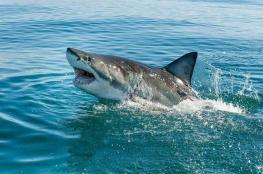 مواجهة مخيفة بين راكب أمواج وسمكة قرش
