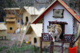 """قرية القطط.. """"فلل"""" وبرك سباحة ووسائل للترفيه"""