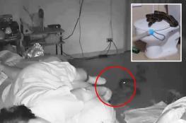 شاهد: ثعبان ينقض على امرأة أثناء نومها