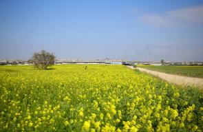 فصل الربيع من بلدة بيت حانون شمال قطاع غزة