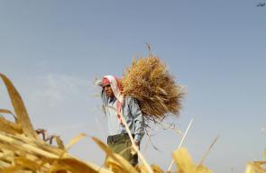 مزارعو الحدود: مُغامرة الزراعة والحصاد