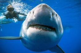 نصف مليون سمكة قرش مهددة بسبب فيروس كورونا