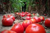 الزراعة بغزة ترفض اشتراطات الاحتلال لعرقلة تسويق المنتجات الزراعية