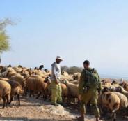d-655-rb2000-اخبار-فلسطين-الاحتلال-يحتحز-اثنين-من-رعاة-الأغنام-شرق-بيت-لحم