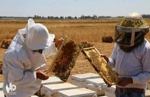 موسم جني العسل في قطاع غزة