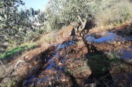 مستوطنون يغرقون أراضي المواطنين في دير الحطب بالمياه العادمة