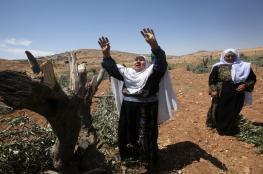 'Farmer terrorism' is the new Jewish settler slogan justifying the destruction of crops