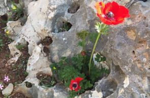أجواء الطبيعة في فلسطين / قبلان نابلس