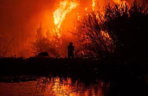 أكثر من 29 قتيلا اثر حرائق مستعرة في الغابات والأحراش في البرتغال