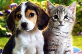 الحيوانات الأليفة تلعب دورا في مكافحة آثار كورونا