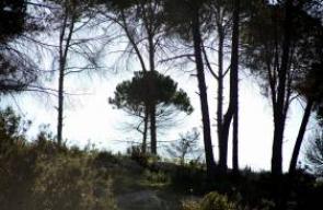 محمية وادي القف شمال غرب مدينة الخليل
