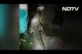 تمساح طوله 5 أقدام داخل مسكن بالهند