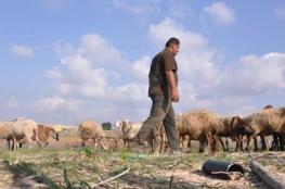 مستوطنون يطلقون النار صوب رعاة أغنام في مسافر يطا