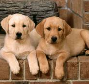 اسماء-كلاب-ذكور