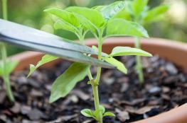 دراسة جديدة: جينات مرض السرطان مصدرها النباتات!