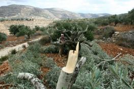 الاحتلال يجرف 5 دونمات ويقتلع 20 شجرة زيتون في راس كركر