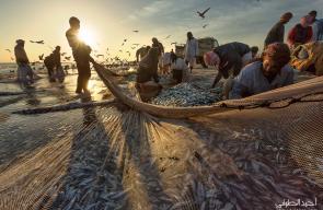 مجموعة من الصور التقطها المصور أحمد الطوقي لموسم صيد السردين بمحافظة ظفار بسلطنة عمان