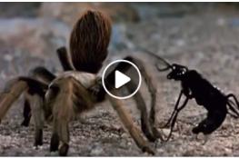مشهد مثير.. دبور يشل حركة عنكبوت ويسحبه نحو الفناء