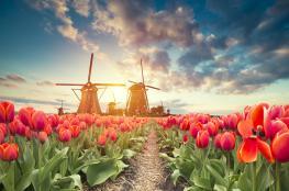 هولندا تُقرر رسميًا التخلي عن اسمها.. ما هو الاسم الرسمي المرتقب؟