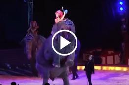 شاهد سقوط فيل على الجماهير أثناء أداء عرض سيرك