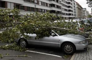 عواصف تقتلع الأشجار في العاصمة الألمانية برلين