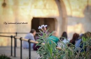 مدينة القدس والمسجد الأقصى المبارك