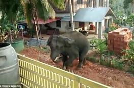"""فيل """"عطشان"""" يطارد سكان قرية هندية"""