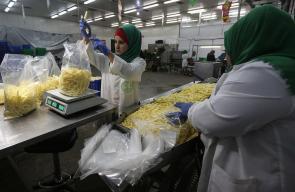إنتاج البطاطس في أحد مصانع قطاع غزة