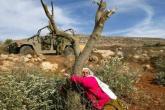 الاحتلال يقتلع 350 شجرة مثمرة في دير بلوط