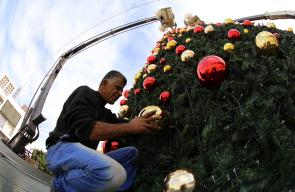 البدء بتزيين شجرة الميلاد في ساحة المهد بمدينة بيت لحم