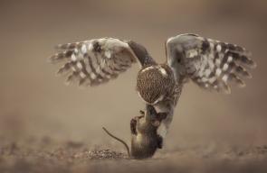 من مجموعة من الصور التقطها المصور هيثم الشنفري