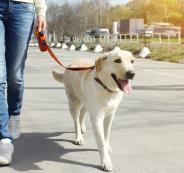 dog-leash-training