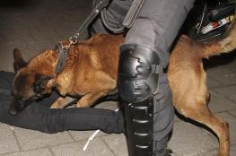 أنقرة تستقدم مواطنا تركيا عضّه كلب للشرطة الهولندية
