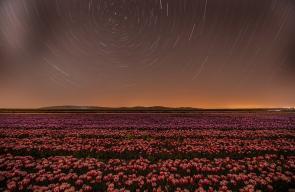 قونيا عاصمة زهور التوليب في تركيا