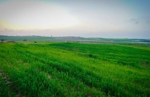 الحدود الشمالية الشرقية في غزة