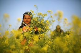 فلسطين: انخفاض على درجات الحرارة