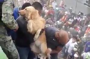 #شاهد انقاذ كلب من تحت ركام منزل دمره زلزال المكسيك