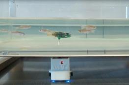 ابتكار جديد.. سمكة ربوت للتجسس على الأسماك