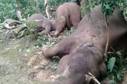 موت تسعة فيلة مصعوقة بالتيار الكهربائي في بوتسوانا