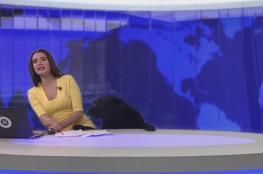 كلب يقتحم استديو أخبار ويعانق المذيعة