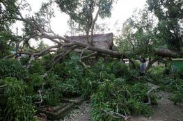 شجرة تقتل 20 تلميذا في غانا