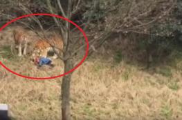 شاهد الفيديو الذي صدم العالم.. نمور تلتهم رجل أمام زوجته وابنته