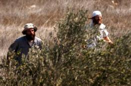 مستوطنون يهاجمون قاطفي الزيتون شرق نابلس