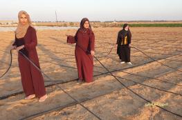 """قلة الوظائف.. تدفع ثلاث خريجات فلسطينيات لـ """"فلاحة الأرض"""""""