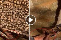 نمر يفترس عامل بحديقة في الرياض